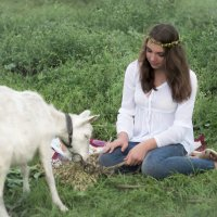Кушай овес,Белянка :: Оксана Задвинская