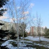 В зимнем парке :: Нина Бутко