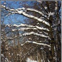 Зима. :: Михаил Розенберг