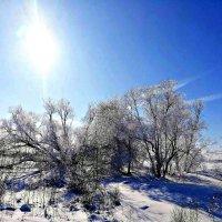 Снег и солнце вид чудесный! :: Михаил Столяров