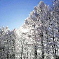 В лучах солнца. :: Михаил Столяров