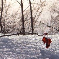 Из-под снега. :: Елена Тренкеншу