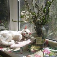 Кошке зимой снится мартовская весна!... :: Алекс Аро Аро