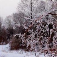 картинка зимы :: Александр Прокудин