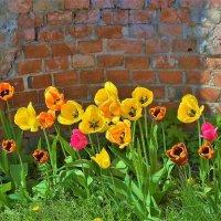 Тюльпаны Марлинского Вала... :: Sergey Gordoff
