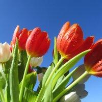 С первым днем Весны ! :: Mariya laimite
