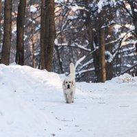 Прогулка морозным утром. :: Владимир Безбородов