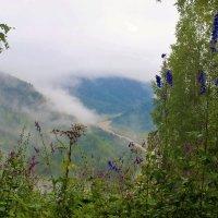 Утренний взгляд в долину с лесной поляны :: Сергей Чиняев