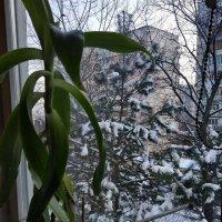 зима :: Алексей Меринов