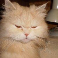 Кот. :: венера чуйкова