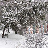 Заметает зима, заметает... :: Александр Корчемный