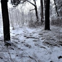 Зима накрыла снежным покрывалом... :: veilins veilins