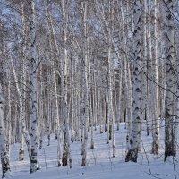 Последний день зимы. :: Татьяна Алферова