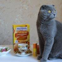 Кот, мешающий сделать натюрморт :: Наталия П