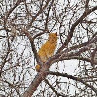 Весенние коты :: Виктор Шандыбин