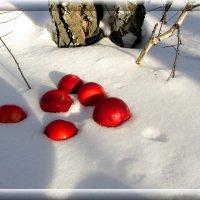 Яблоки на снегу :: Владимир