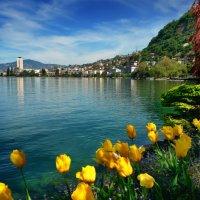желтые тюльпаны :: Elena Wymann