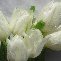 Белые тюльпаны... :: Mariya laimite