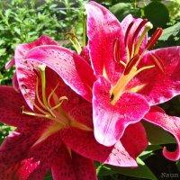 Яркий цвет :: Лидия (naum.lidiya)