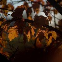 Осень :: Наталья Лещинская
