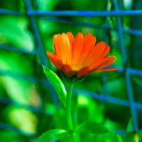 цветок :: Олеся Б