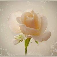 есть Доверчивость женского сердца – и она расцветает весной :: Людмила Богданова (Скачко)