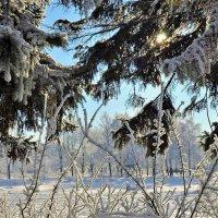 Заглянуть в зимнюю Сказку... :: Sergey Gordoff