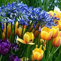 Яркие краски весны! :: Татьяна Помогалова