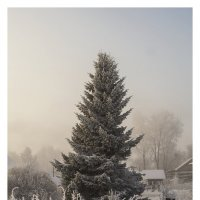 Растет елка в огороде. :: Марина Никулина