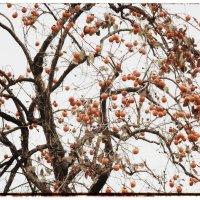 Осенние плоды. :: Вера Катан