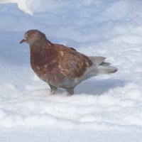 Весна,а снега по колено... :: Тамара (st.tamara)