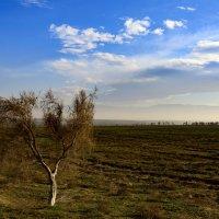 Саксаул – растение Пустыни :: Григорий Карамянц
