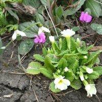 Весна в разгаре! :: Светлана Масленникова