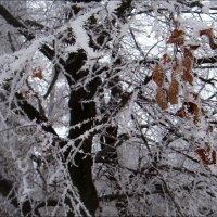 Зимний ажур :: Нина Корешкова