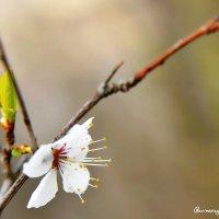 Весна неизбежна... :: Сергей Леонтьев