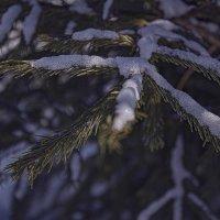 Последний снег :: Анастасия сосновская
