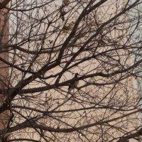 Голубь  на дереве :: Инна Крыжановская