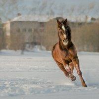 лошадки :: Ирина Кузина