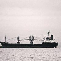 Из жизни кораблей и чаек :: Оксана #