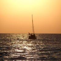 На море :: Ольга Беляева