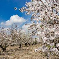 Сады цветут :: Tatyana Belova
