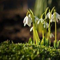 Весна уже радует нас первым теплом. Дорогие Женщины с наступающим вас женским днем! :: Евгений Ромащенко