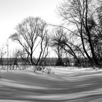 Графика зимы :: Оксана Сергеева