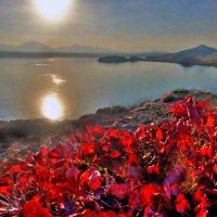 мгновения осеннего покоя :: viton