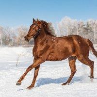 Конь :: Nn semonov_nn