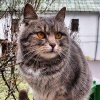 Кошечка :: Ольга Милованова