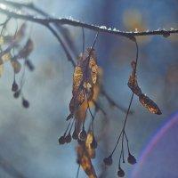 Липовый цвет :: Седа Ковтун