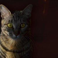 кошка Марыся :: Ольга Зеленкова