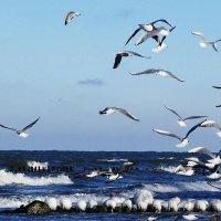 Чайки над морем :: Маргарита Батырева