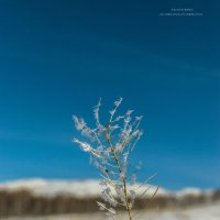 цветок зимы :: Екатерина Агаркова